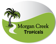 Morgan Creek Logo web